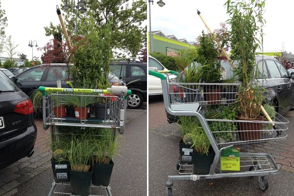 Pflanze Einkäufe