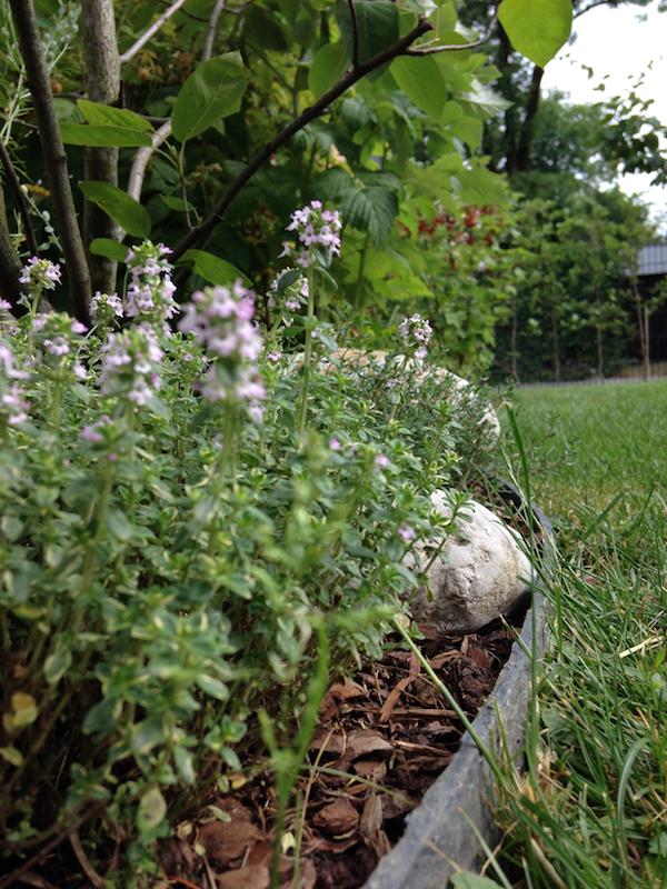 Ecolat Rasenkante